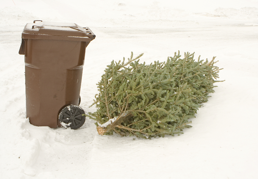 Automated Waste Services offer advice for Christmas tree disposal