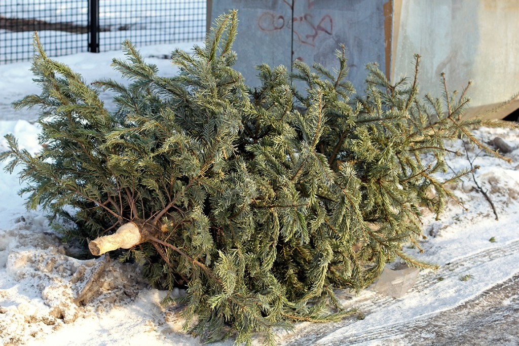 Christmas tree on the ground ready to be picked up by a trash removal company